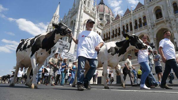 Protest poljoprivrednika u Budimpešti - Sputnik Srbija