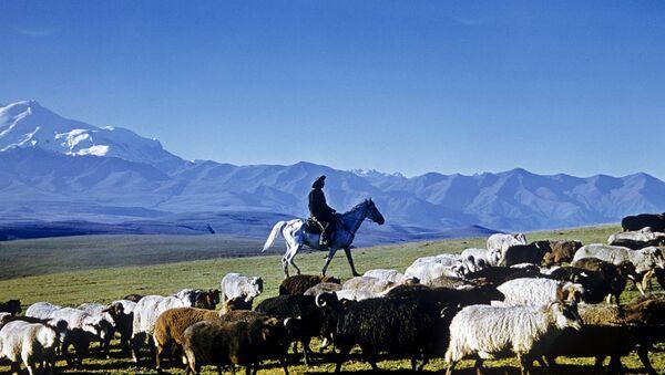 Čobanin čuva ovce - Sputnik Srbija