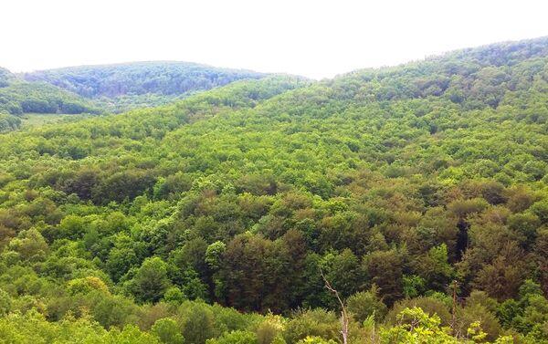 Извори се налазе високо у брду, на извору Ђавоље јаруге. - Sputnik Србија