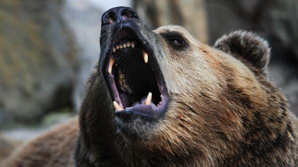 Medved - Sputnik Srbija