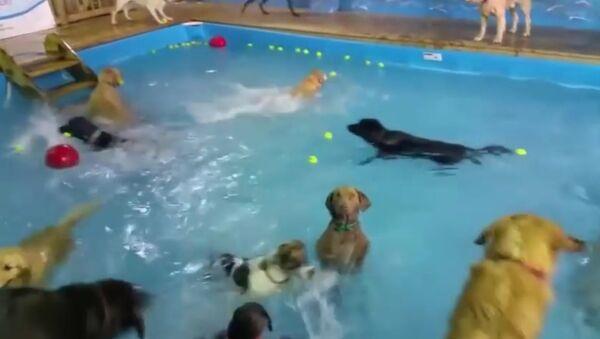 Video of socially awkward dog goes viral - Sputnik Srbija