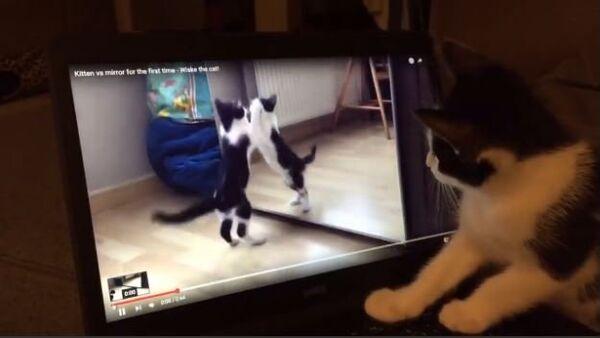 Confused Kitten Watches Video of Herself - Sputnik Србија
