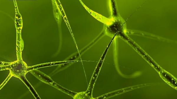 Neuron - Sputnik Srbija