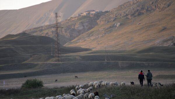 Stado na pašnjaku u Dagestanu - Sputnik Srbija