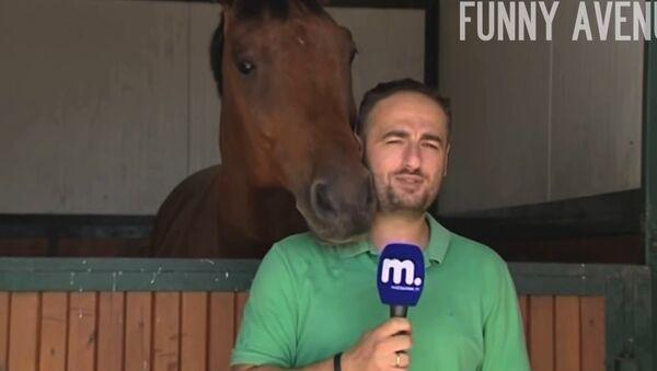 Horse Interrupts Reporter News Blooper - Sputnik Србија