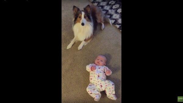 Dog teaches baby how to roll over - Sputnik Srbija