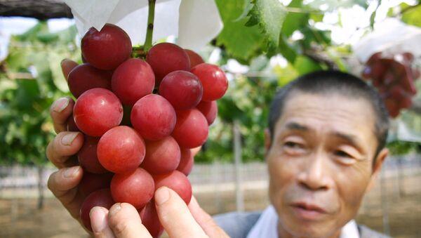 Japanski farmer Tsutomu Takemori pokazuje grozd vrste Romanski rubin u prefekturi Išikava na severu Japanu - Sputnik Srbija