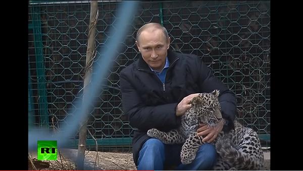 Vladimir Putin ukrotio leoparda - Sputnik Srbija