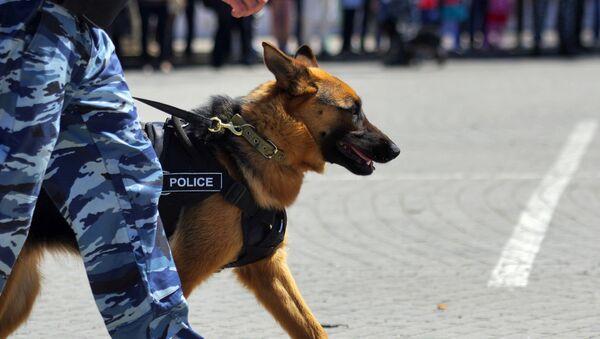 Полицијски пас Кинолошког центра у Севастопољу - Sputnik Србија