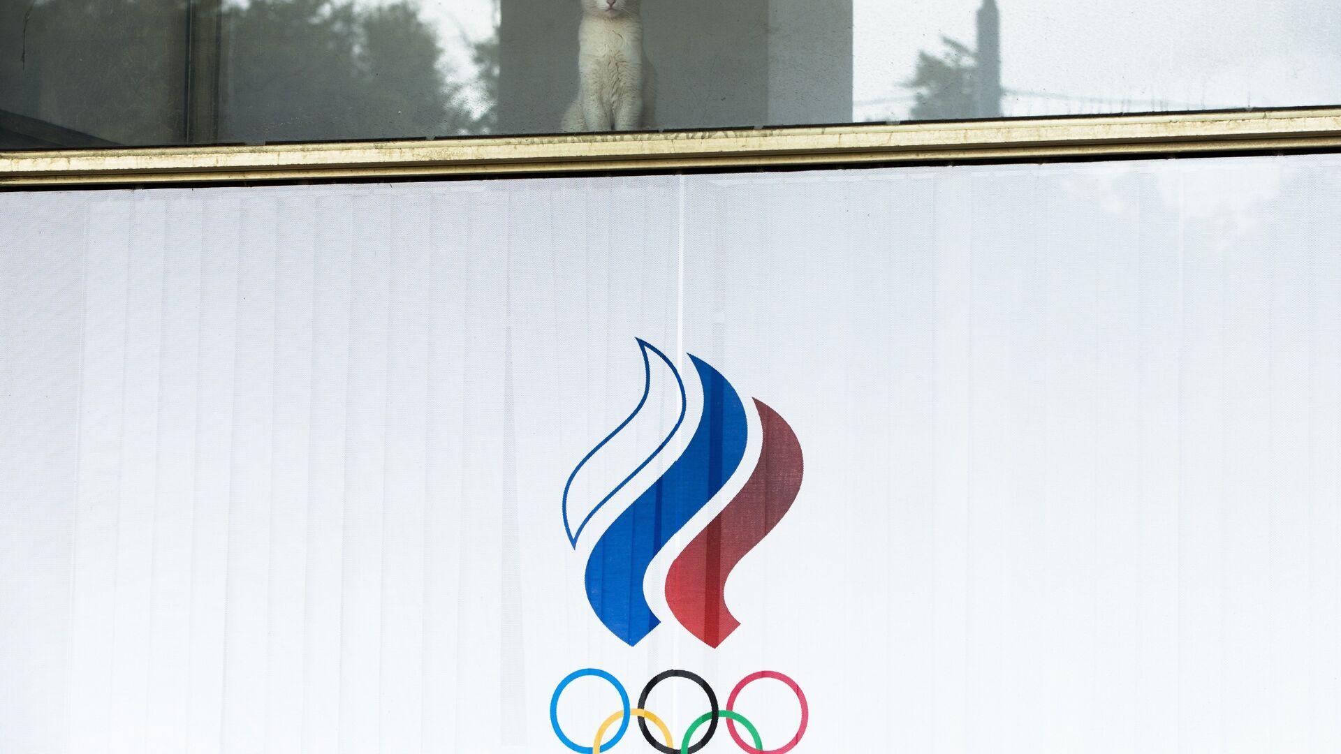 Мачка гледа кроз прозор зграде Руског олимпијског комитета. - Sputnik Србија, 1920, 17.07.2021