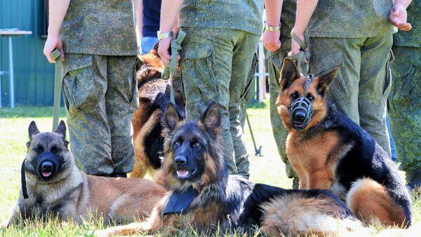 Takmičenje psećih odreda vojske Verni drug - Sputnik Srbija
