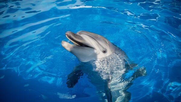 Делфин - Sputnik Србија