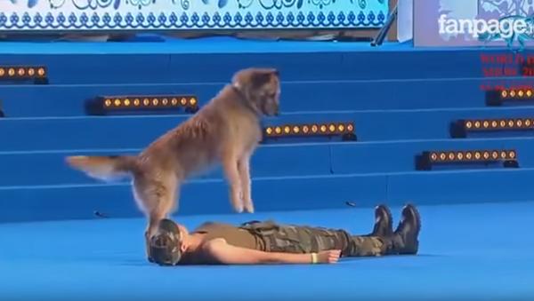 Пас пружа прву помоћ - Sputnik Србија
