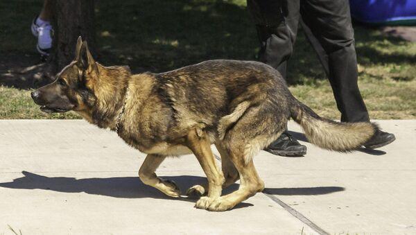 Policijski pas - Sputnik Srbija
