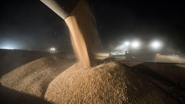 Пшеница - Sputnik Србија