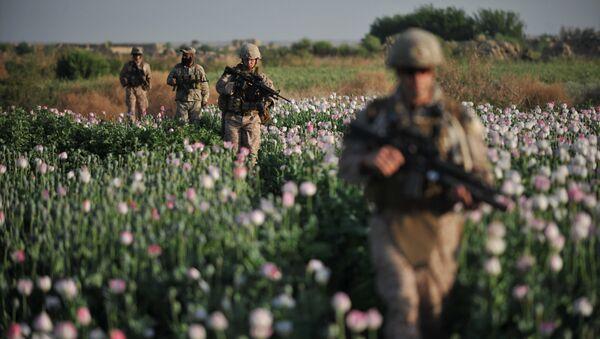 Припадници америчке морнарице иду кроз поље мака у провинцији Хелманд у Авганистану - Sputnik Србија