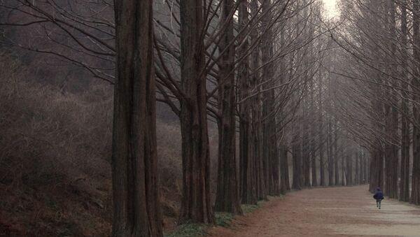 Дечак у шуми - Sputnik Србија