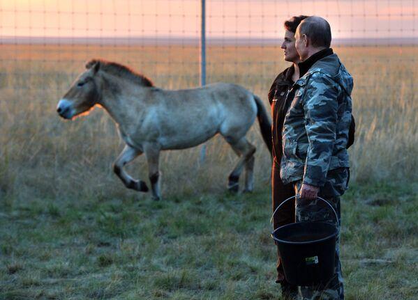 Владимир Путин храни нахранио коње Пржеваљског - Sputnik Србија