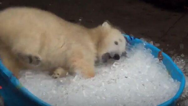 Mladunče polarnog medveda - Sputnik Srbija