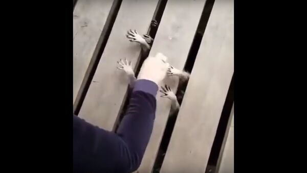 porch hands - Sputnik Србија