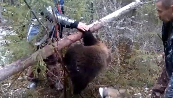 Ловци ослободили медведића из замке - Sputnik Србија