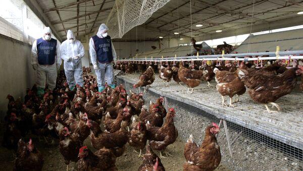 Ветеринари на живинској фарми у Италији - Sputnik Србија