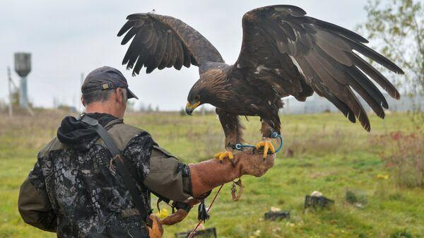 Radnik sa zlatnim orlom u rezervatu prirode Galič u Rusiji - Sputnik Srbija