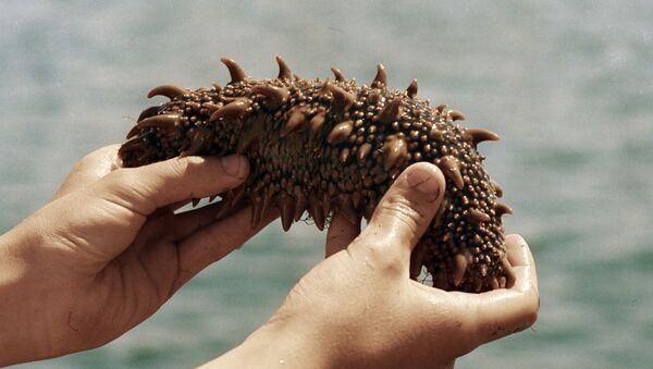 Sea cucumber - Sputnik Srbija