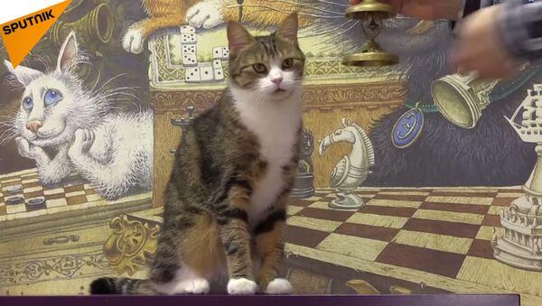 Мачка математичарка - Sputnik Србија