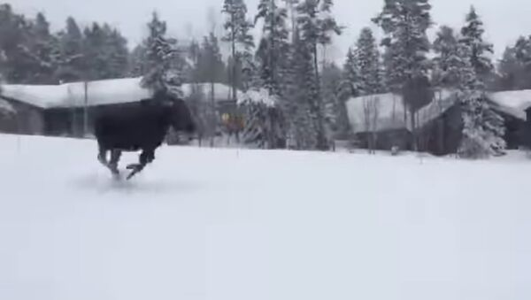 Лос јури сноубордере - Sputnik Србија