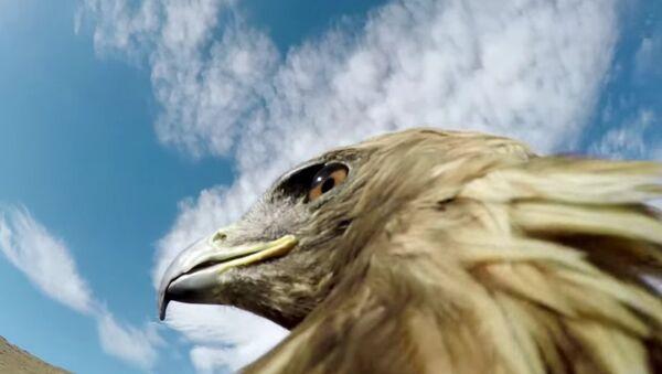 Lov na lisicu iz ptičje perspektive - Sputnik Srbija