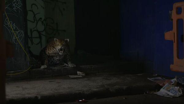 Леопард робот, Лондон - Sputnik Србија