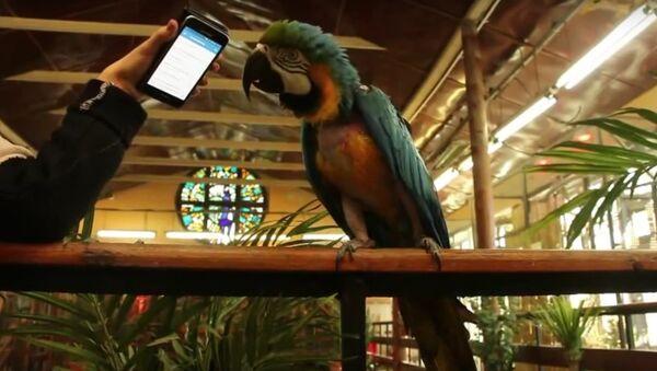 Papagaj Monika pleše uz popularnu rusku pesmu - Sputnik Srbija