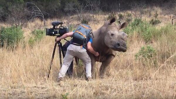 Снимање носорога изблиза - Sputnik Србија