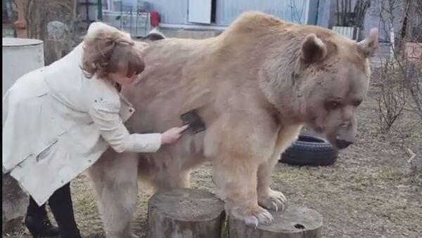 Медвед се чешља - Sputnik Србија