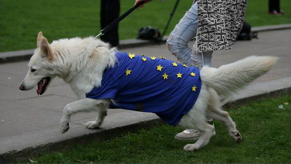 Devojka vodi psa koji je obučen u odelce sa simbolima EU - Sputnik Srbija
