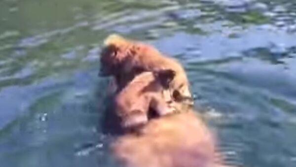 Mama grizli i mladunci - Sputnik Srbija