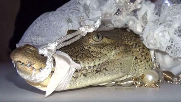 Mlada krokodil - Sputnik Srbija
