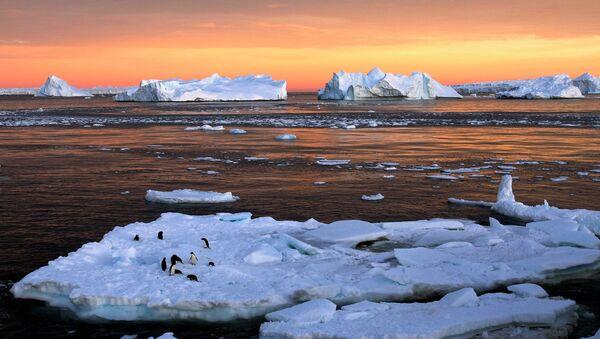 Пингвини на леднику у Антарктику - Sputnik Србија