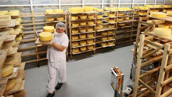 Ruski farmer Oleg Sirota u svojoj mlekari u Podmoskovlju - Sputnik Srbija