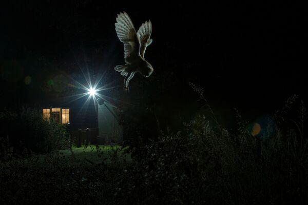 Skupljači perja: Najlepše fotografije ptica - Sputnik Srbija