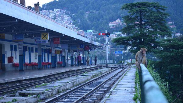Мајмун на железничкој станици - Sputnik Србија