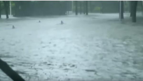Ajkule plivaju ulicama Majamija. - Sputnik Srbija