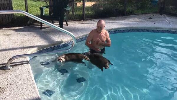 Bolje nego sa delfinima: plivanje sa rakunima - Sputnik Srbija