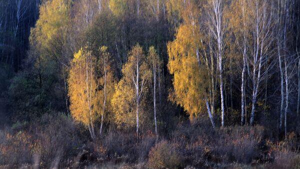 Šuma - Sputnik Srbija