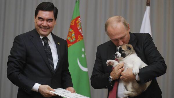 Председник Туркменистана Гурбангули Бердимухамедов поклонио је руском колеги Владимиру Путину штене - Sputnik Србија