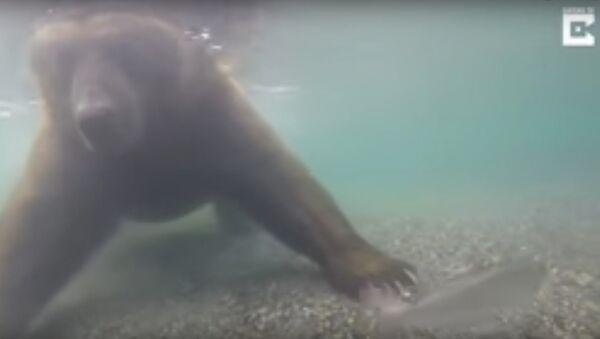 Медвед лови рибу - Sputnik Србија