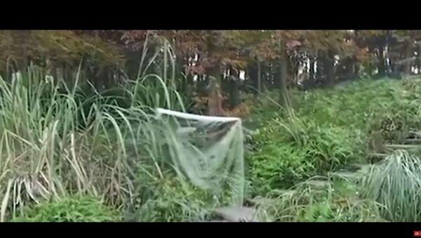 Nevidljivi ogrtač - Sputnik Srbija