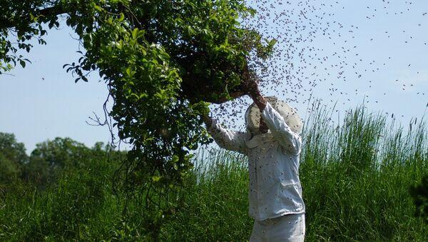 Pčelar - Sputnik Srbija