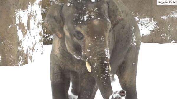 Слон у зоолошком врту у Орегону - Sputnik Србија